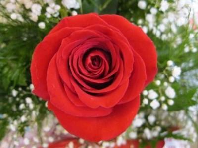 Valentines Day 2013 005 400x300 Friday Update 2/22/13