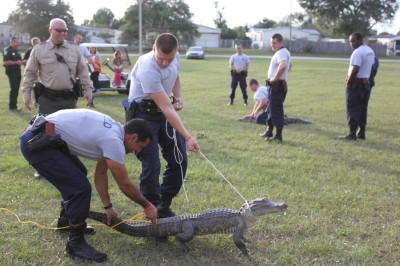alligator IMG 7063 400x266 Friday Update 11/15/13