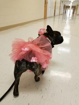 Valentine Lola in Hallway 021519