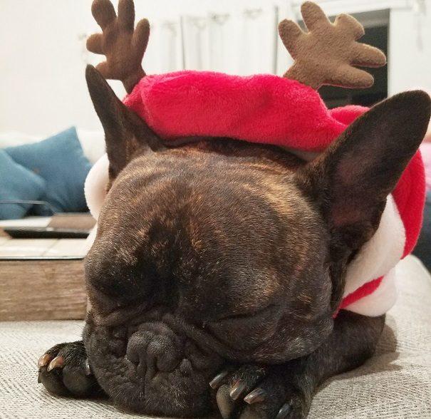 Lola Christmas