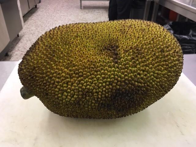 Culinary Jackfruit1 013120 Academic Affairs 01/31/20